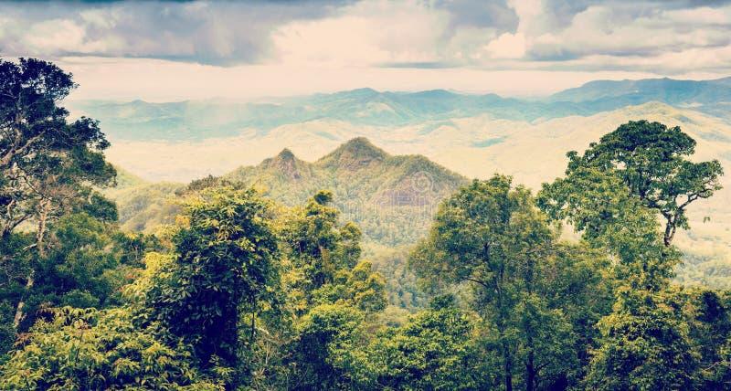 昆士兰雨林内地 免版税库存图片
