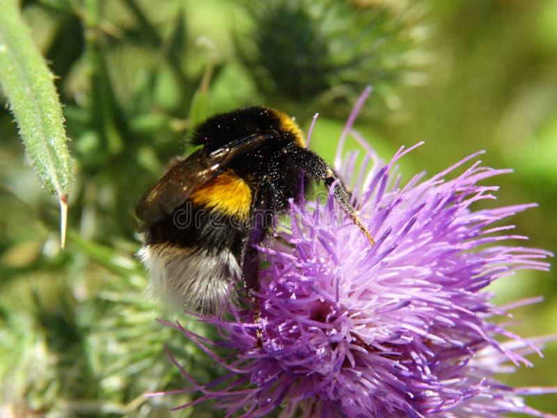 昆虫和其他种类 免版税图库摄影