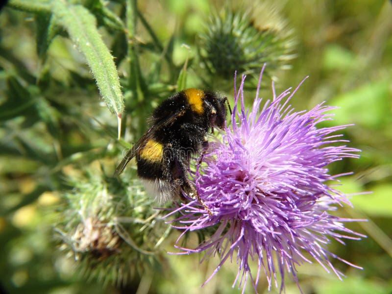 昆虫和其他种类 图库摄影