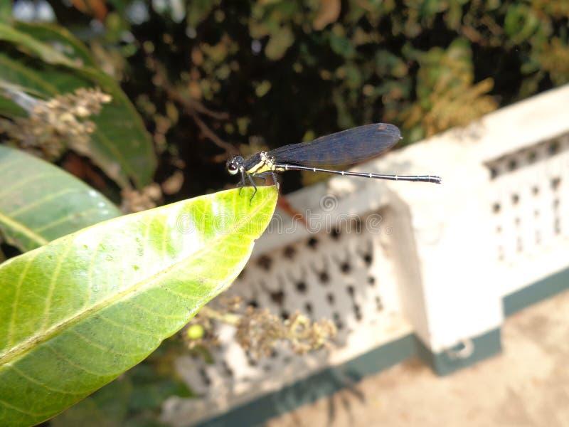 昆虫在森林里 图库摄影
