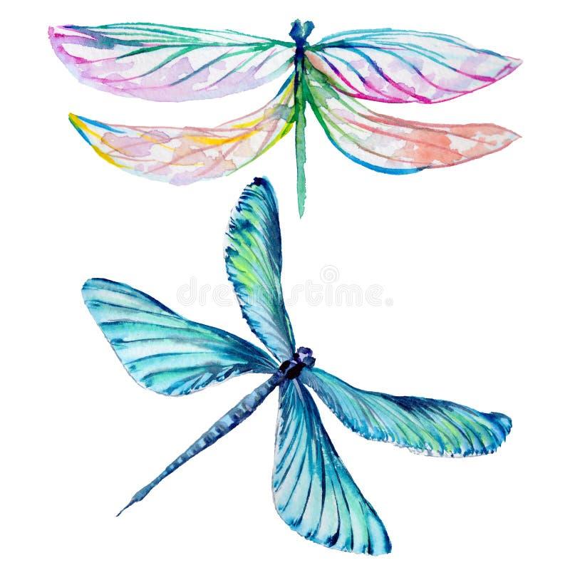 昆虫在水彩样式的蜻蜓集合被隔绝的 库存例证