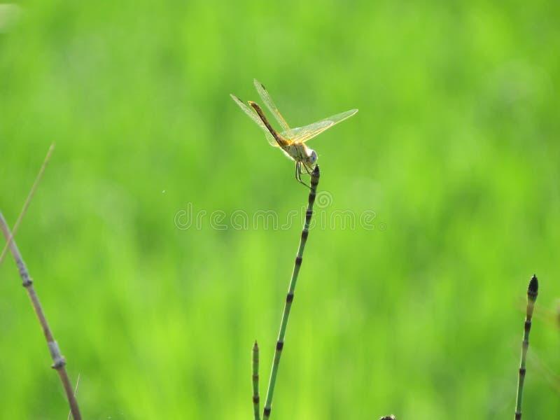 昆虫在Isla de Buda 库存照片