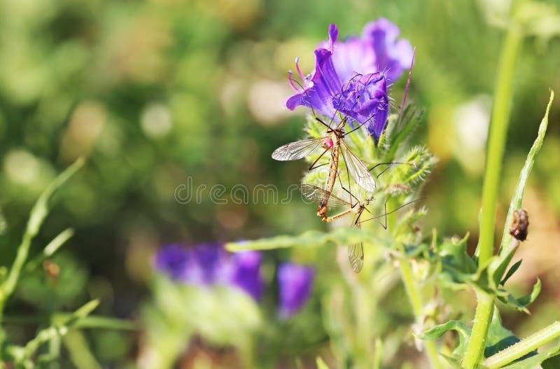 昆虫坐在自然-宏观摄影的开花的紫色花 库存照片