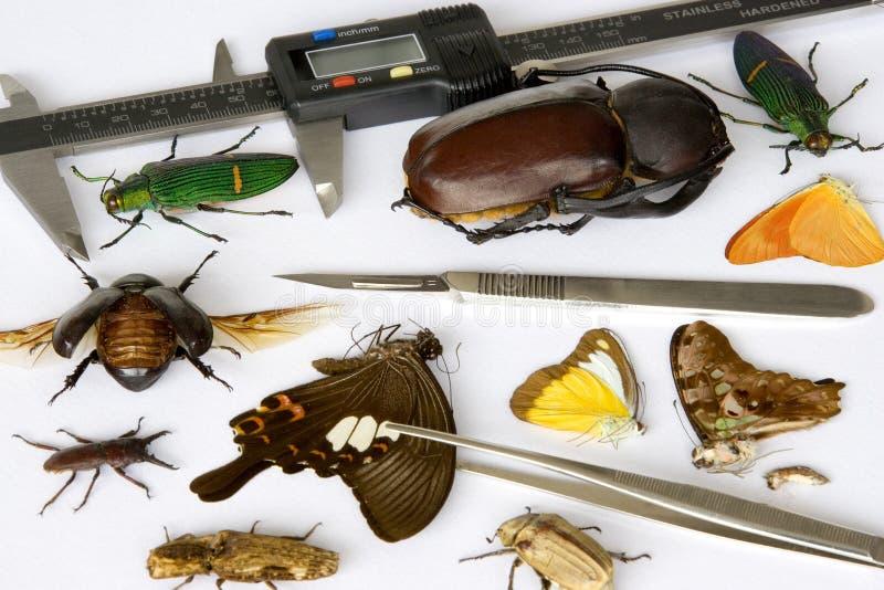 昆虫学 库存照片