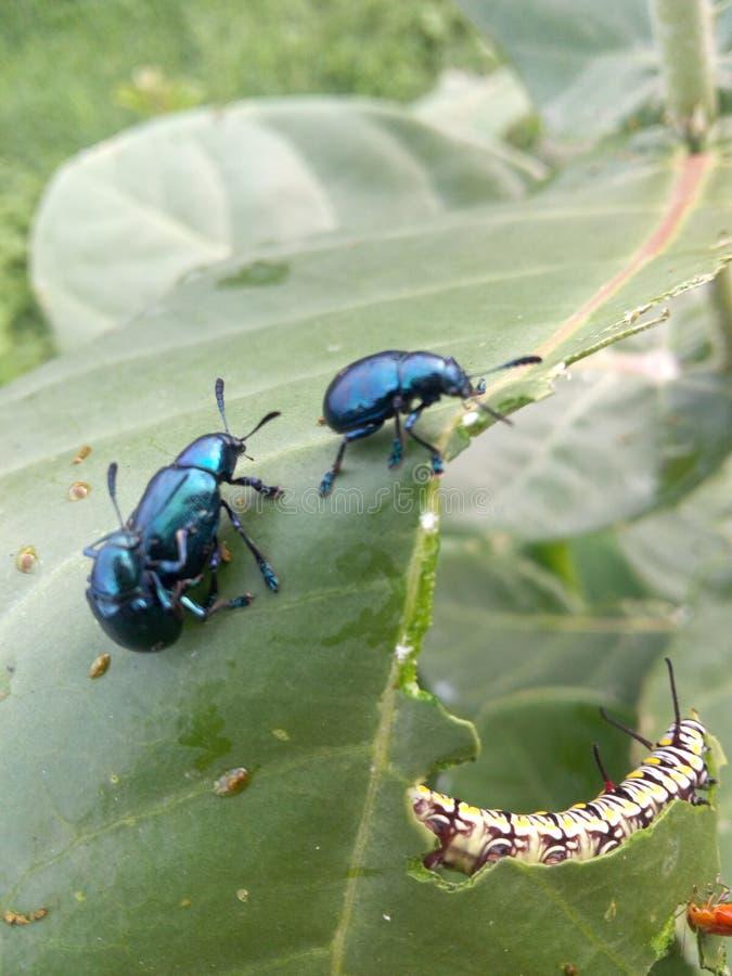 昆虫最佳的照片  免版税库存图片