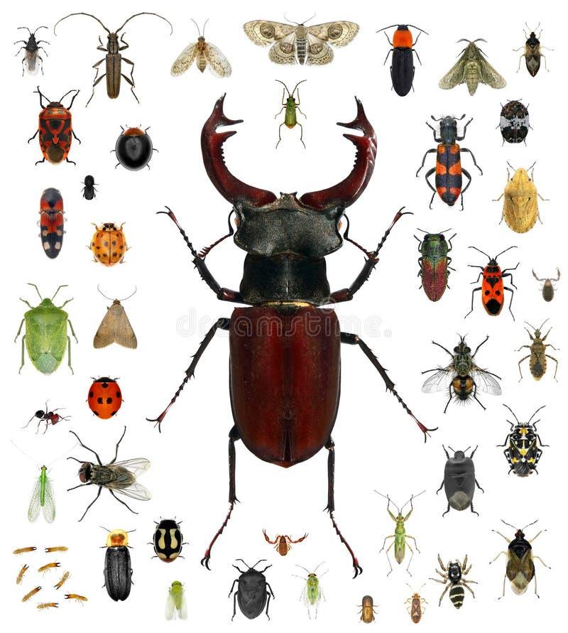 昆虫汇集 库存照片