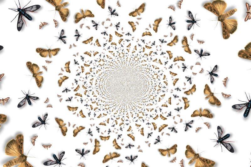 昆虫漩涡 向量例证