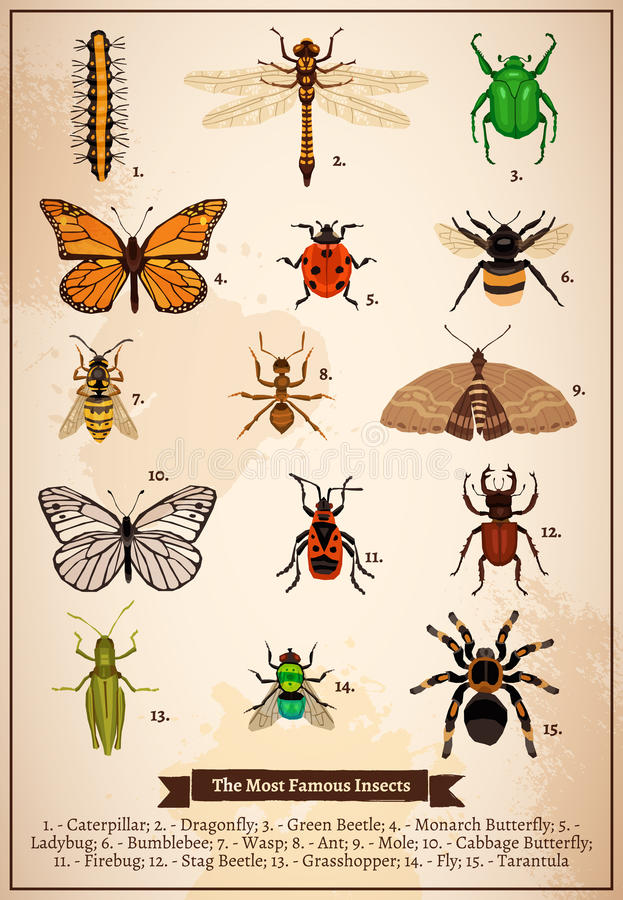 Download 昆虫葡萄酒书页 向量例证. 插画 包括有 装饰, 艺术, 报价, 昆虫, 格式, 乱画, 蜻蜓, 瓢虫, 自然 - 72356477