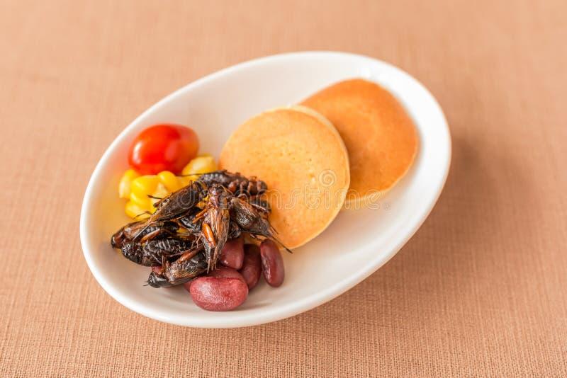 昆虫薄煎饼 库存照片