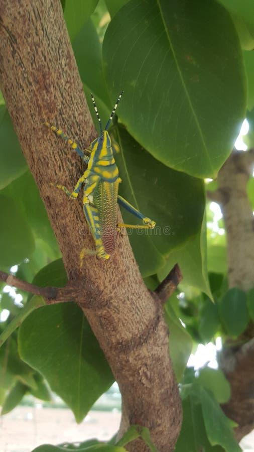 昆虫,树,自然,生活 库存图片