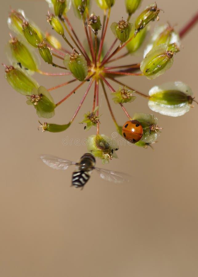 昆虫绿色植物种子 免版税库存图片