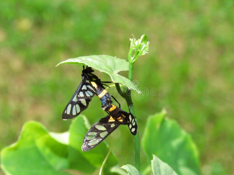 昆虫-蝴蝶饲养在庭院里 图库摄影