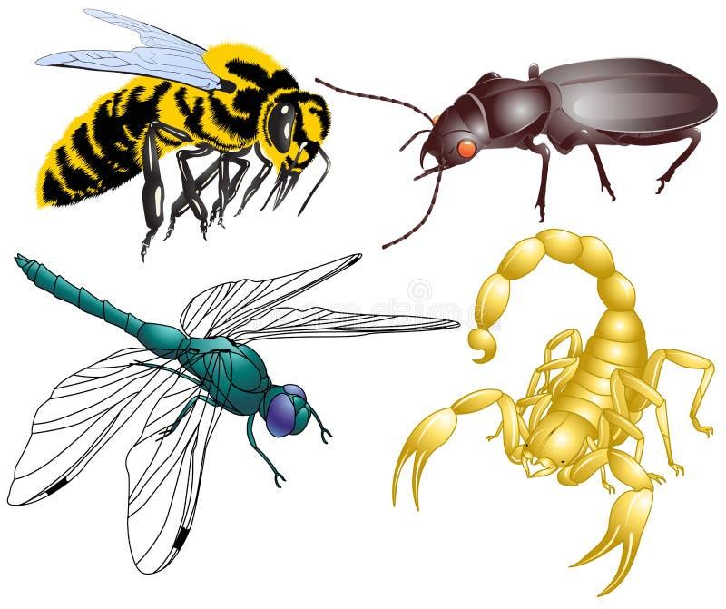 昆虫 皇族释放例证