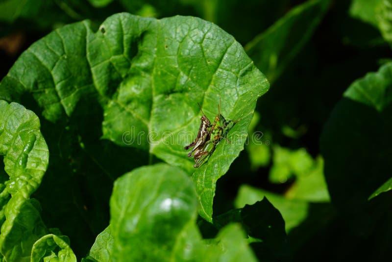 昆虫 免版税图库摄影