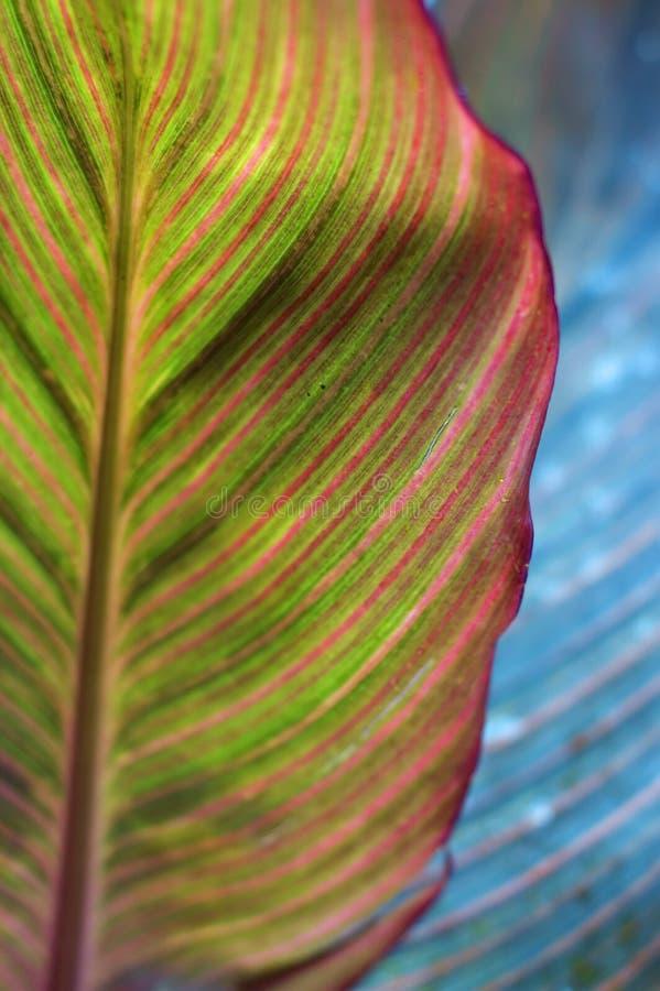 明亮的五颜六色的创造性的叶子本质 库存图片