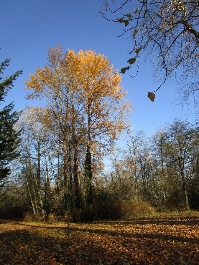 明亮的五颜六色的秋天风景和树,2018年11月 库存照片