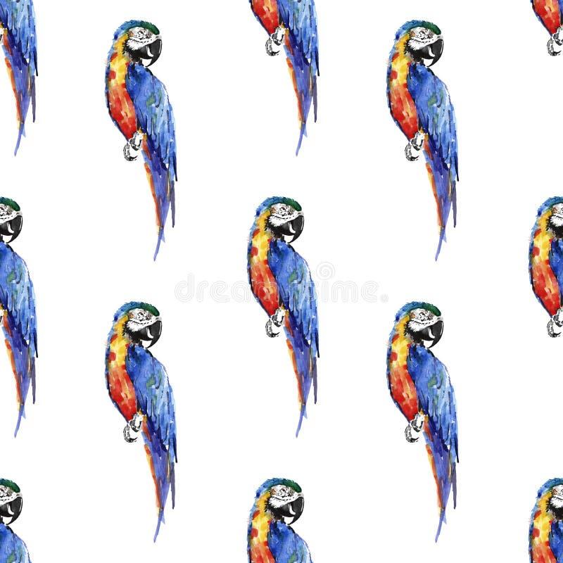 明亮的五颜六色的美丽的可爱的老练密林热带黄色,绿色,红色和蓝色大热带鹦鹉对角线样式 向量例证