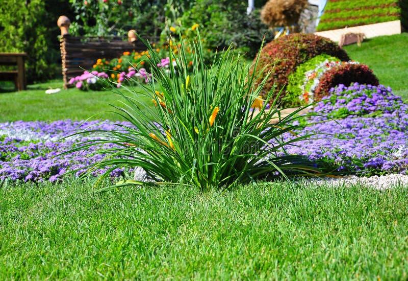 明亮的五颜六色的花花圃 在草坪nastut的黄色,红色,紫色花与绿草在庭院里 免版税库存照片