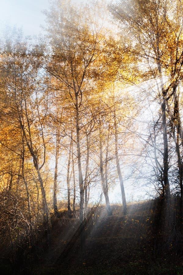 Download 明亮的光芒 库存图片. 图片 包括有 叶子, 阳光, 背包, 森林, 照亮, 金子, 春天, 本质, 黎明 - 30327119