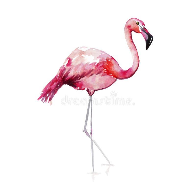 明亮的可爱的嫩柔和的老练美妙的热带夏威夷动物野生夏天海滩桃红色火鸟仿造水彩韩 向量例证
