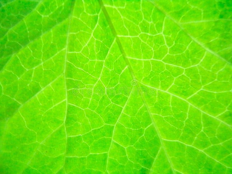 明亮的叶子纹理 库存图片