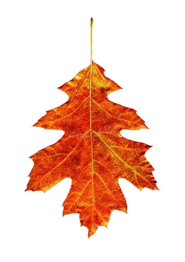明亮的叶子 免版税库存图片