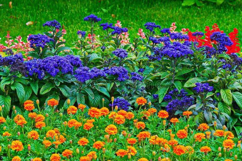明亮的各种各样的颜色美丽的花与绿色水多的叶子的 取悦眼睛的美好的构成 免版税图库摄影