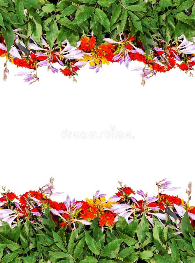 明亮的夏天框架在黑背景开花 欢乐花卉模板 贺卡设计 顶视图 免版税图库摄影