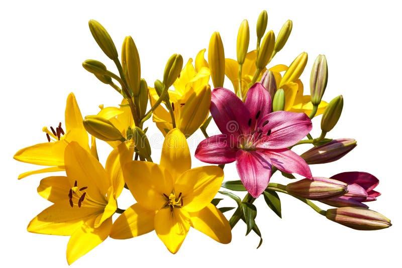 明亮的多彩多姿的百合花束在白色背景的 库存图片