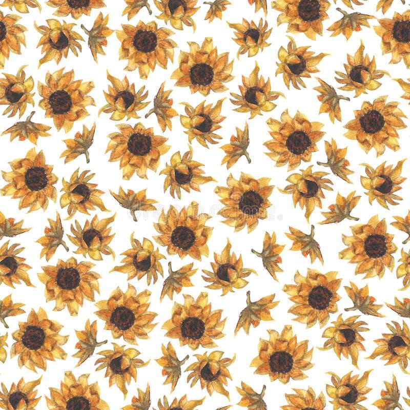 明亮的无缝的样式用向日葵 手拉的水彩花 向量例证