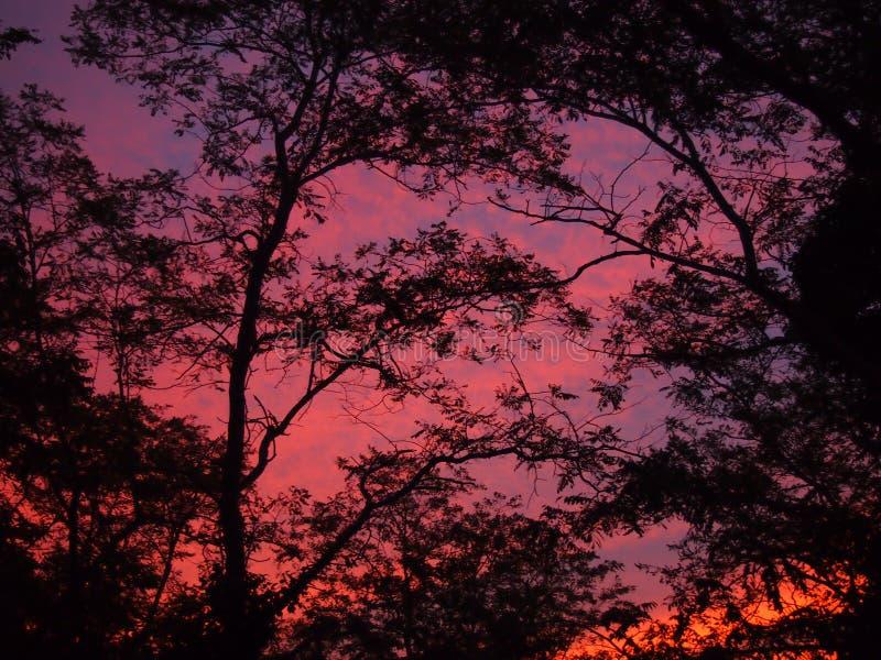 明亮的日落 库存图片