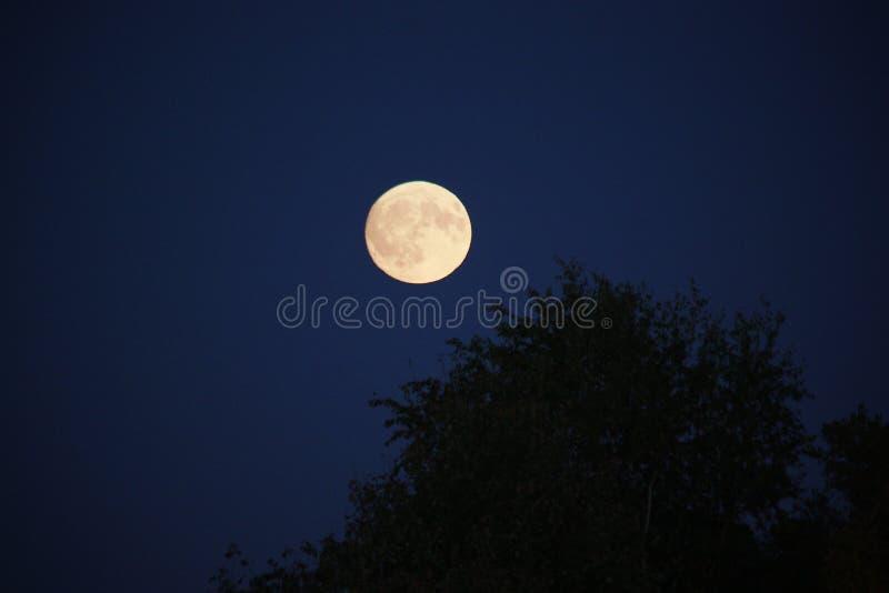 明亮的月亮 免版税库存照片
