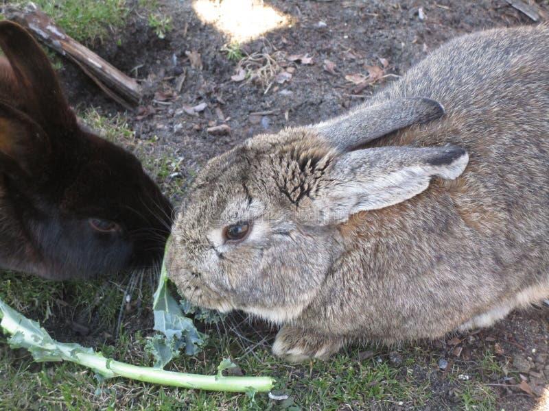 明亮的有吸引力的美好的对哺养在素食者的小兔2019年 免版税图库摄影