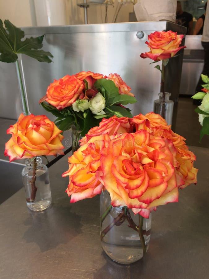 明亮的桃子玫瑰 库存照片
