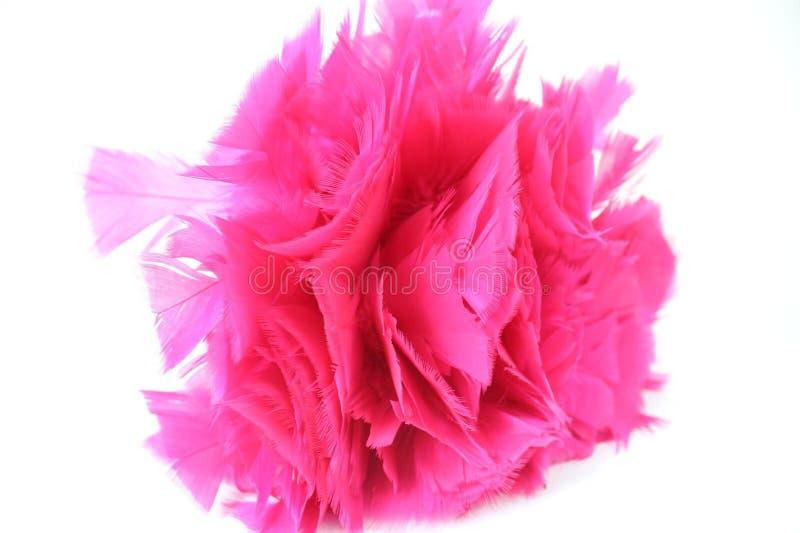 明亮的桃红色羽毛喷粉器关闭 库存图片