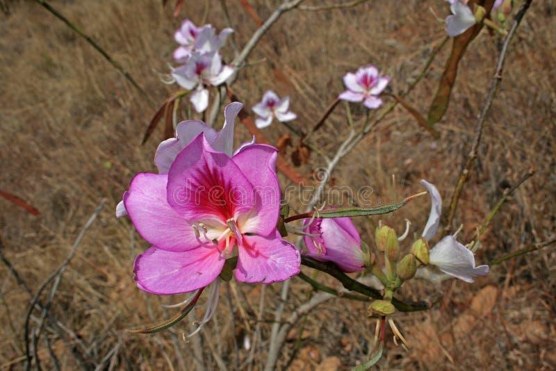 明亮的桃红色野花在草原 免版税库存图片