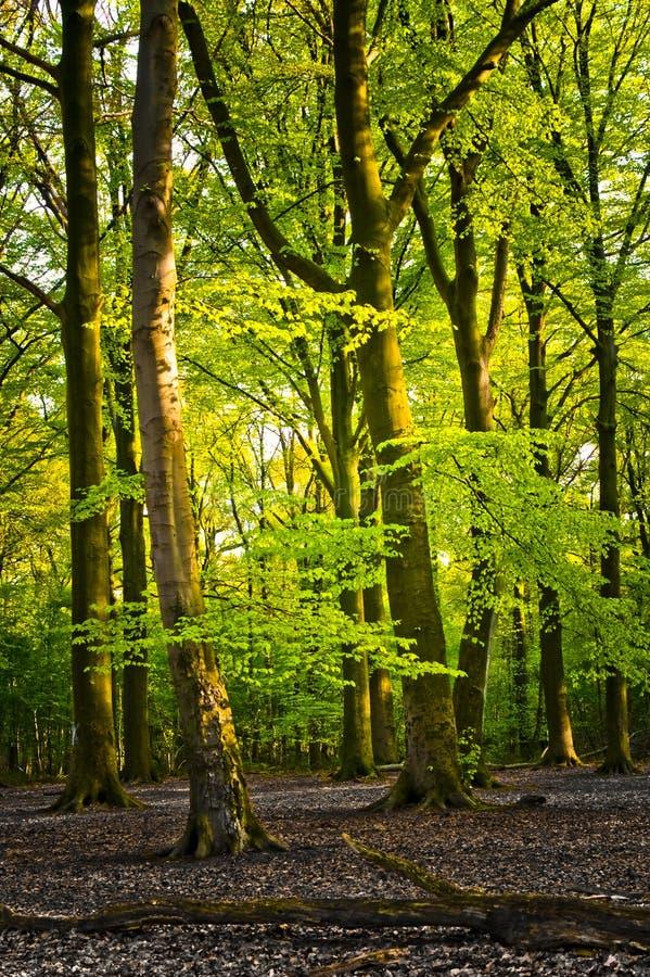 明亮的森林夏天 库存照片