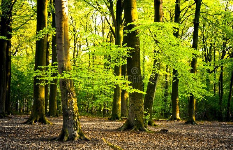 明亮的森林 库存图片