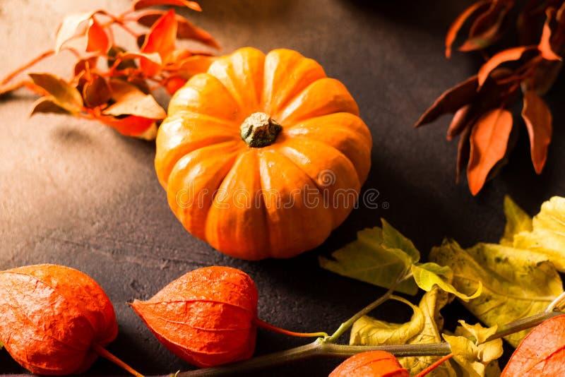 明亮的橙色微型南瓜为在黑背景的万圣夜 免版税库存照片