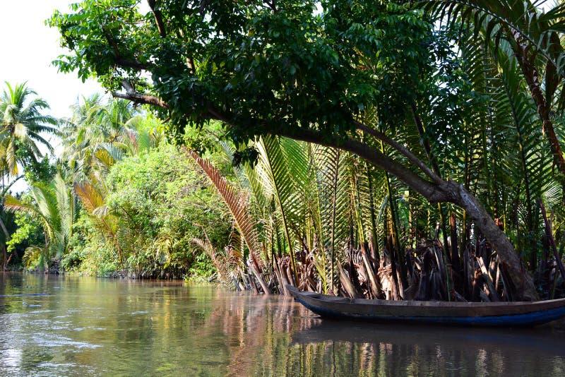 明亮的浓雾森林高例证密林层质量河日落超级稀薄的唯一水 槟知 湄公河三角洲区域 越南 库存图片