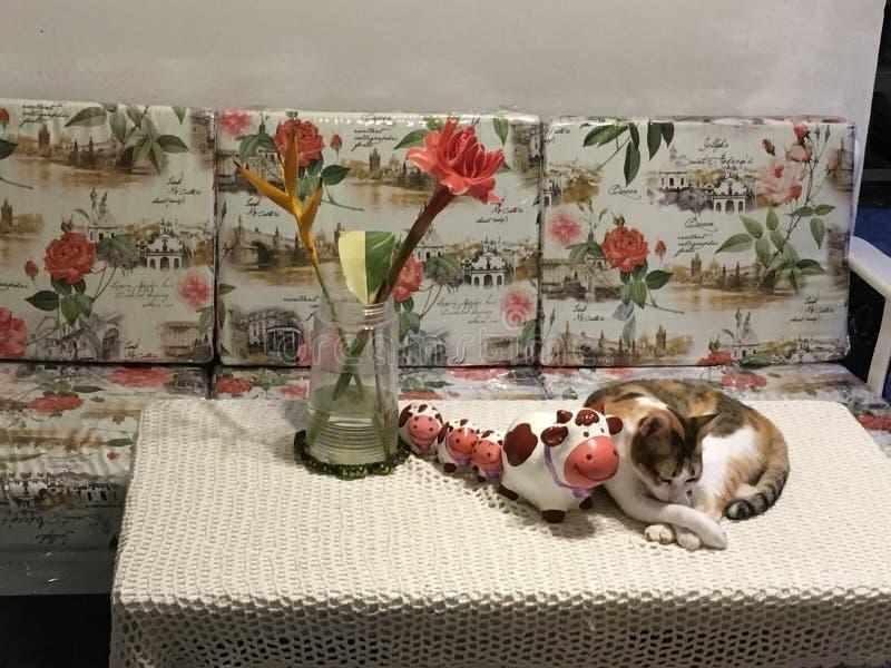 明亮的热带橙色火炬姜开花在一个花瓶的Etlingera elatior有杂色猫的 免版税库存照片