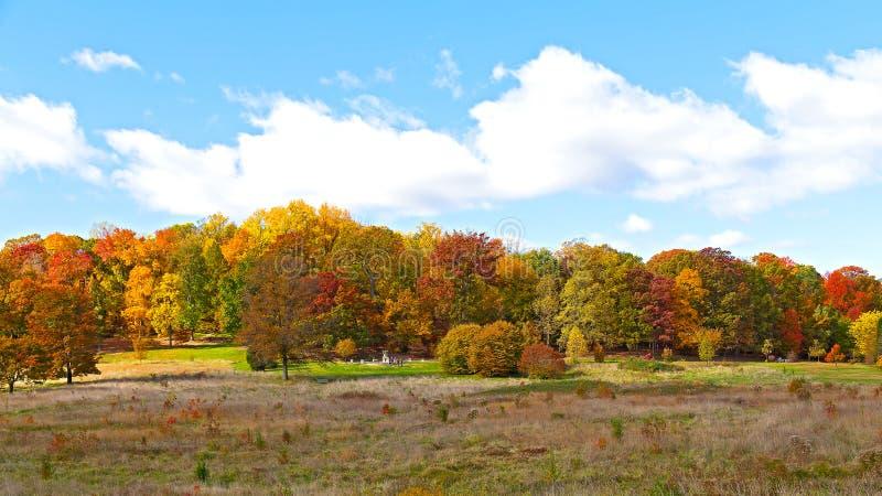 明亮的秋叶在美国首都 图库摄影