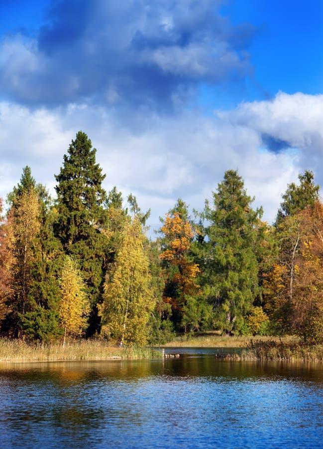 明亮的秋天木头在湖被反射在一个晴天 免版税库存照片