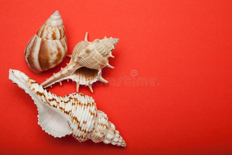 明亮的红色背景和海壳 r 图库摄影