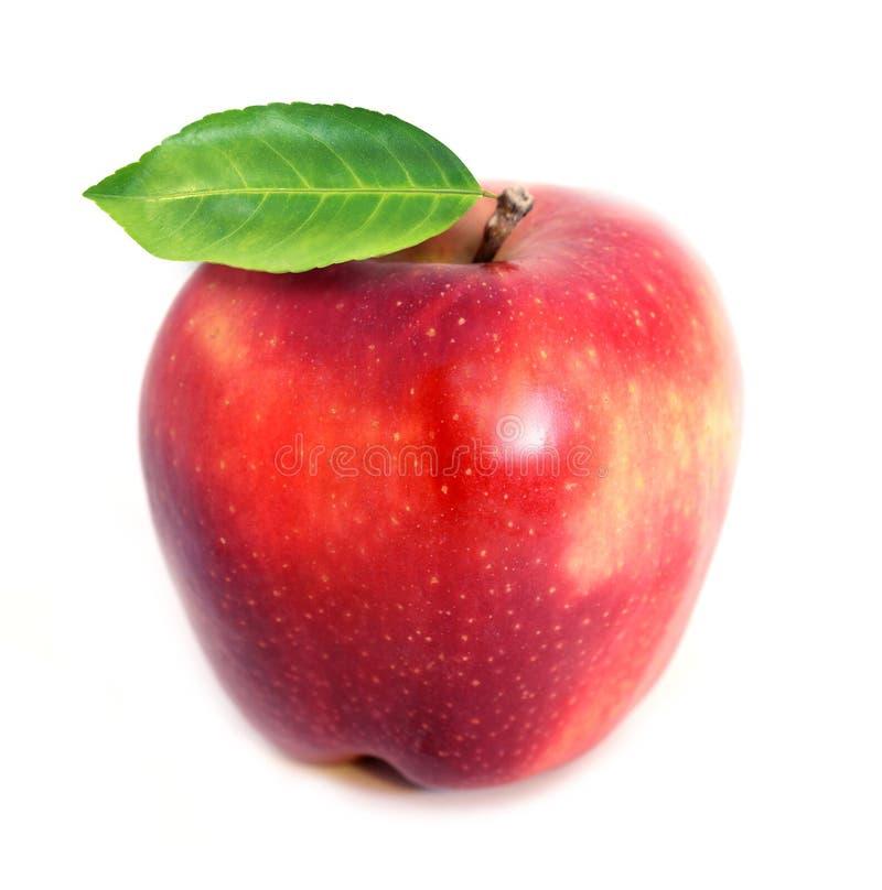 明亮的红色被隔绝的苹果宏观照片  库存图片