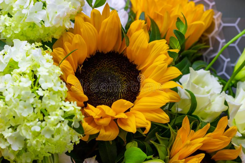 明亮的花束用黄色向日葵和玫瑰、桃红色南北美洲香草和绿色荚莲属的植物花卉背景 库存图片