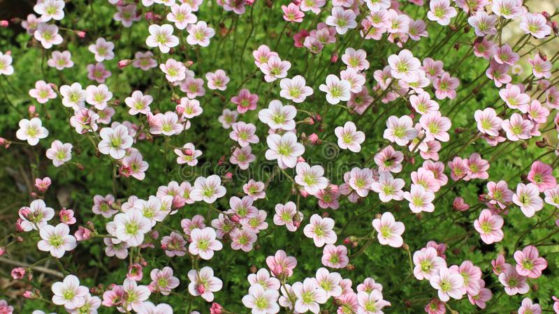 明亮的花青苔 库存图片