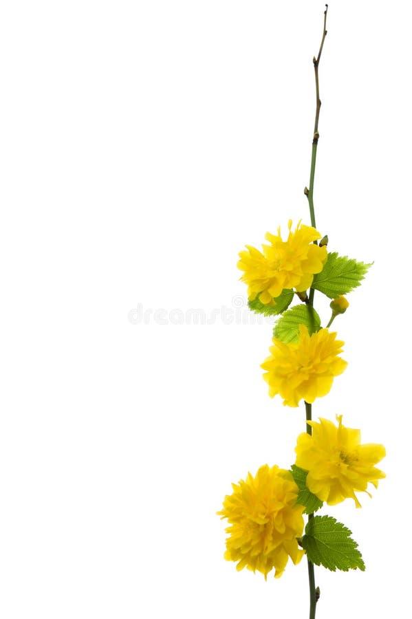 明亮的花黄色 库存照片
