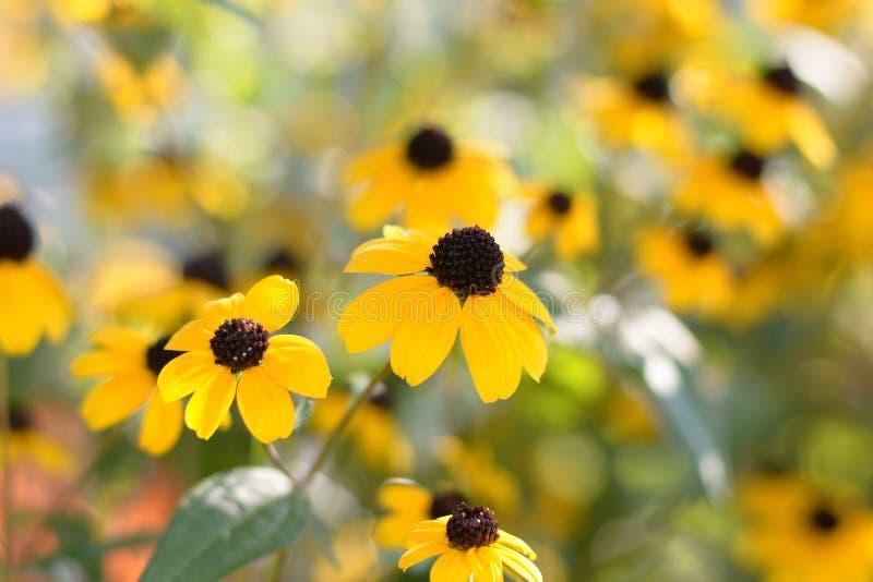 明亮的花黄色 免版税库存照片