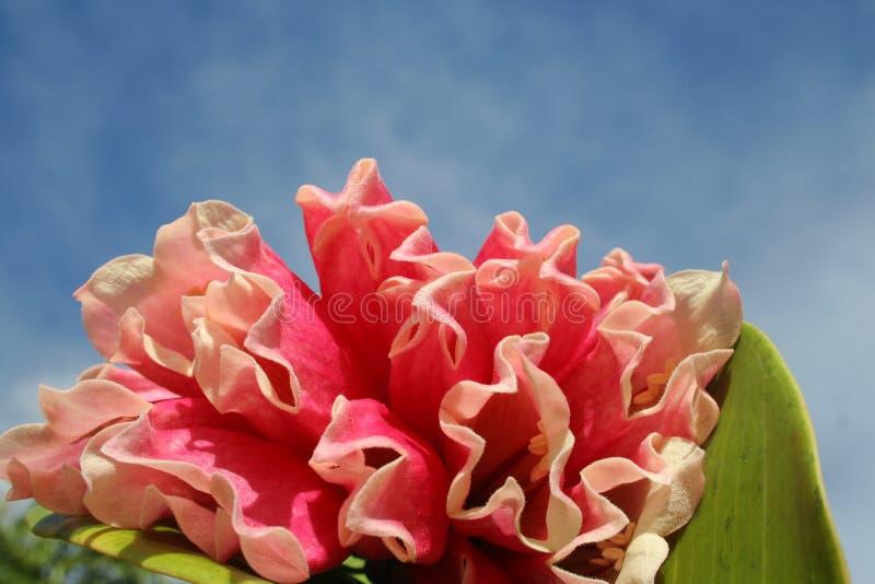 Download 明亮的花 库存照片. 图片 包括有 上色, beautifuler, 花卉, 照亮, 热带, 红色, 花束, 加勒比 - 178032